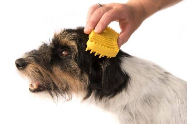 Grooming dog hair with yellow rubber brush