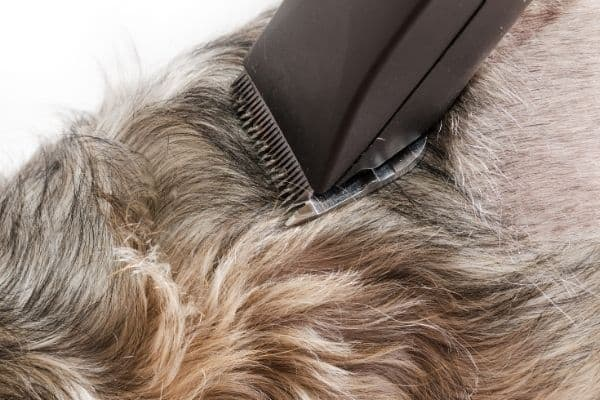 Dog clipper blades dog fur