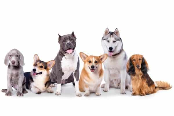 Dogs with different coat type on white background