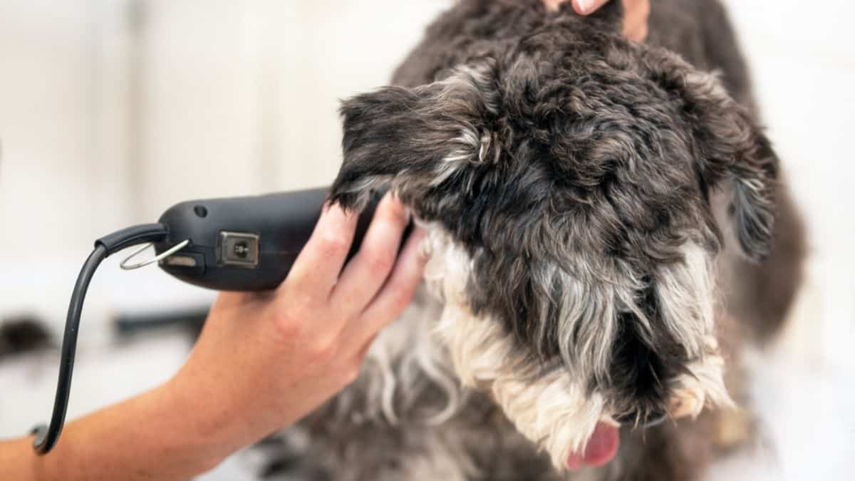 Best Dog Clippers for Thick Fur