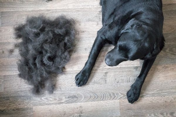 Best Inexpensive Dog Clippers