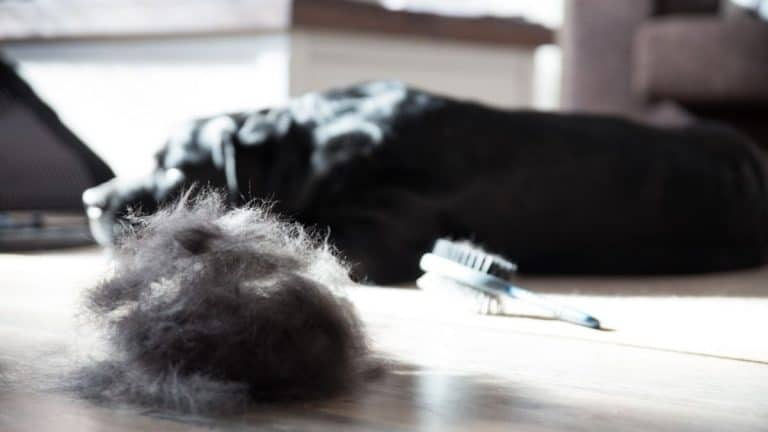 Best Tool for Deshedding a Dog [Top 10 For Short & Long Hair in 2021]