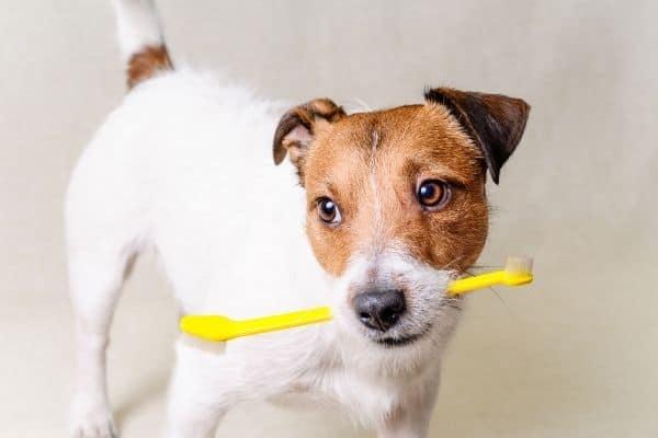 best dog dental wipes