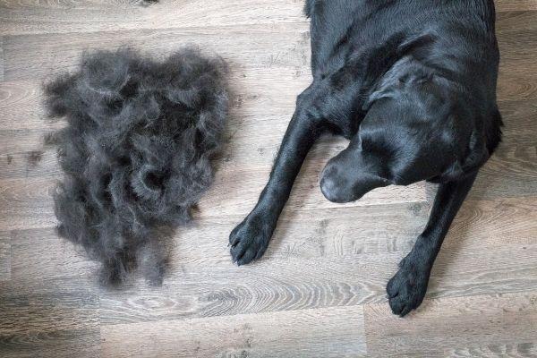 best dog grooming brush