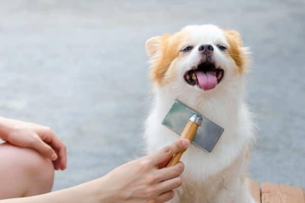 dog grooming brush