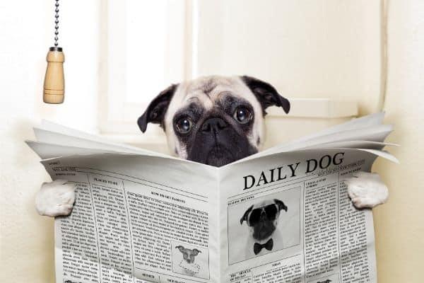 Best Dog Urine Removers