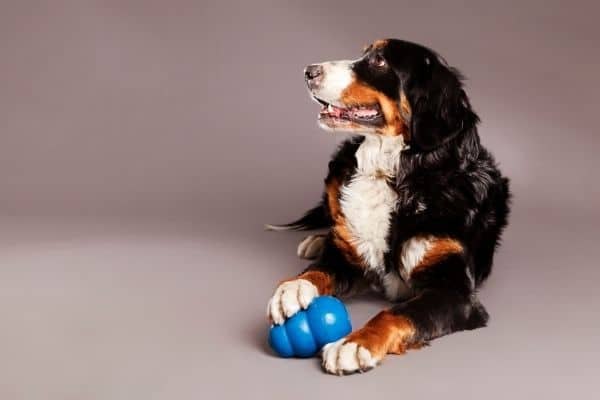 Best Interactive Dog Toys for Large Breeds
