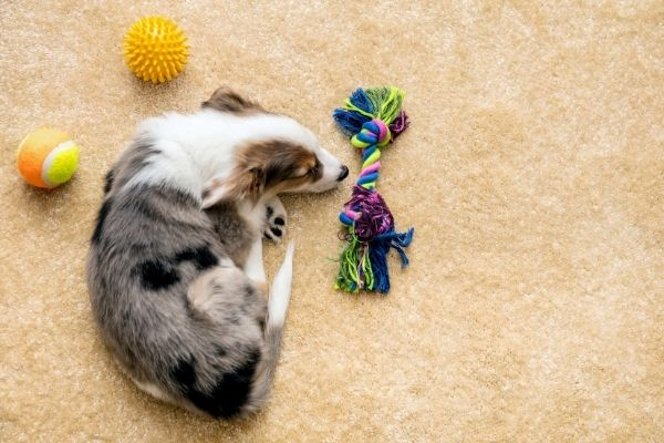 10 Best Interactive Dog Toys