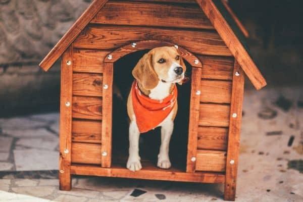 Best Heated Dog House