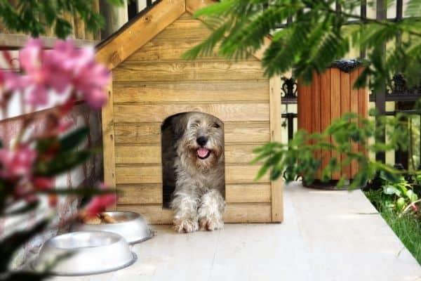 Best Heated Dog Houses