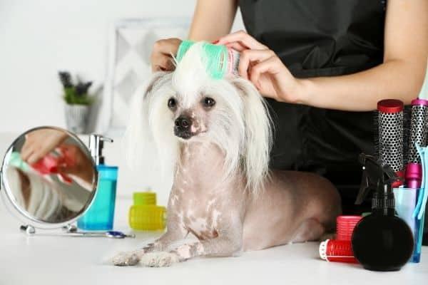 Best Dog Grooming Gloves