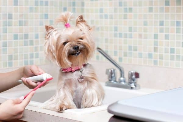Adorable dog smiling while waiting for toothbrush