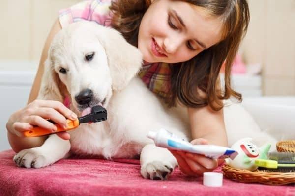 Woman brushing dog's teeth at home