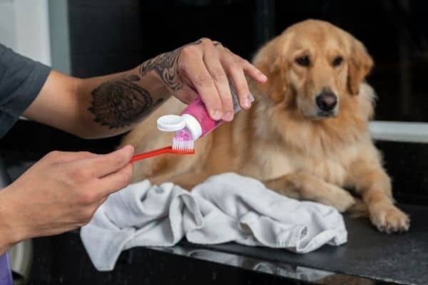 Brown dog about to get teeth brushed with dog toothpaste