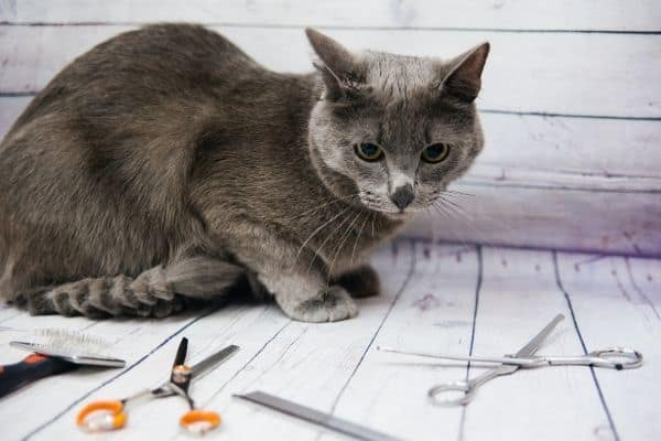 Cute cat surrounded by grooming tools