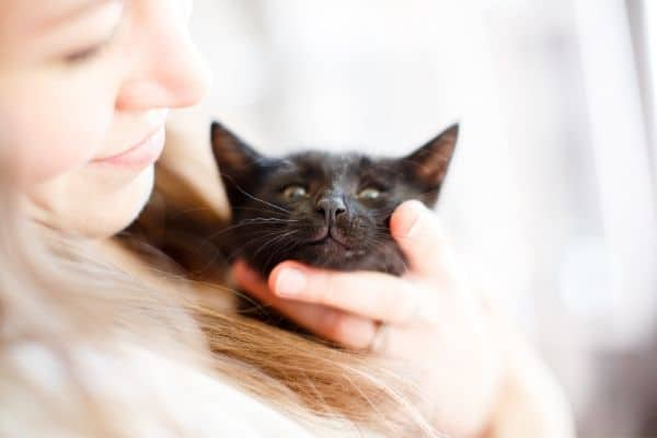 how to relax a cat for grooming