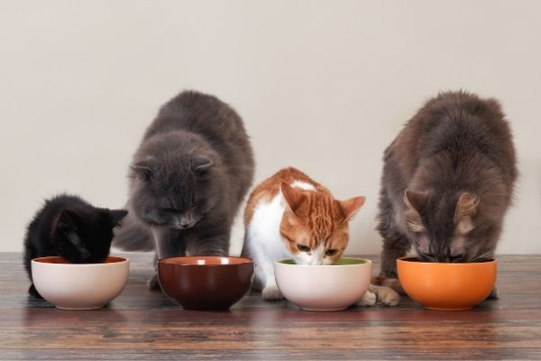 Four cats eating food from pet bowls