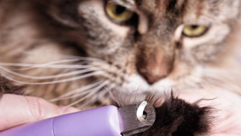 How to Relax a Cat for Grooming (and When to Sedate) – 9 Ultimate Tips