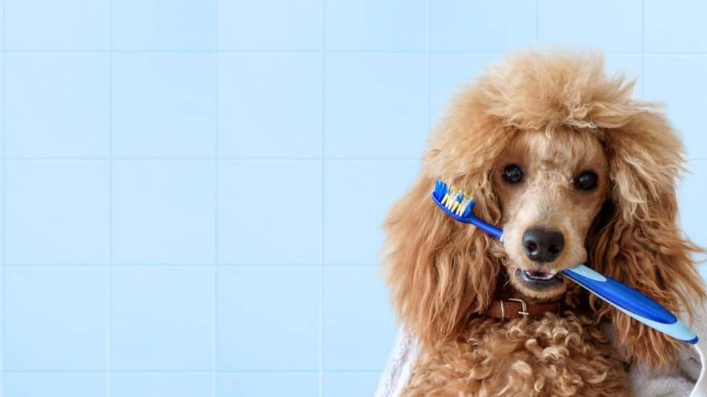 vet recommended dog toothpaste