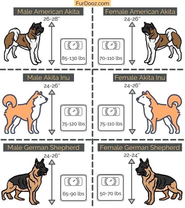 american akita vs japanese akita vs german shepherd comparison