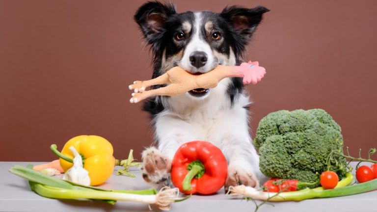 What Green Vegetables Are Good For Dogs? (Yes, Dogs Should Eat Veggies Too!)