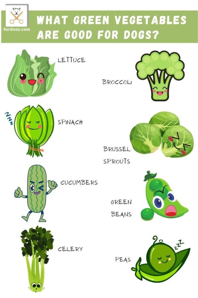 list of the best green vegetables for dogs