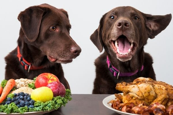 brown dogs with platters of meat and vegetables