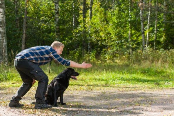 man training a labrador retriever