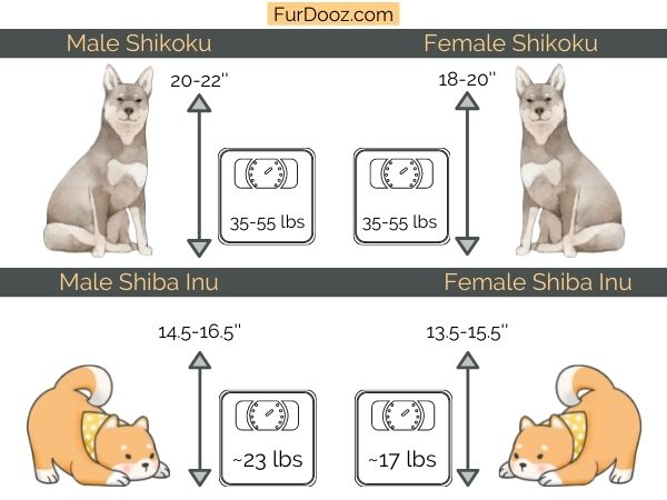 shikoku dog vs shiba inu height and weight