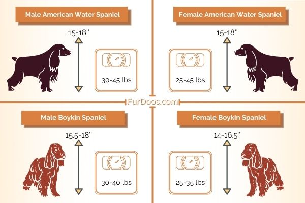American Water Spaniel vs Boykin Spaniel Weight and Height of Males and Females